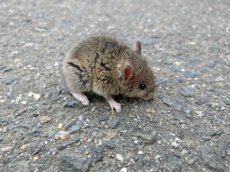 ネズミがいるかも?兆候と駆除方法、対策について